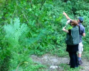Matt point out a hooded warbler for Cassy at Blucher Park. (Photo by Terry Byrne)